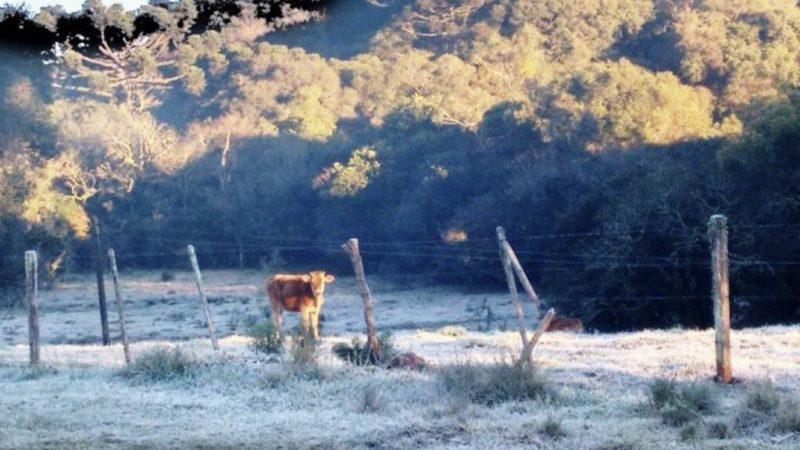 Semana começa fria e terminará gélida com geada e chance de neve