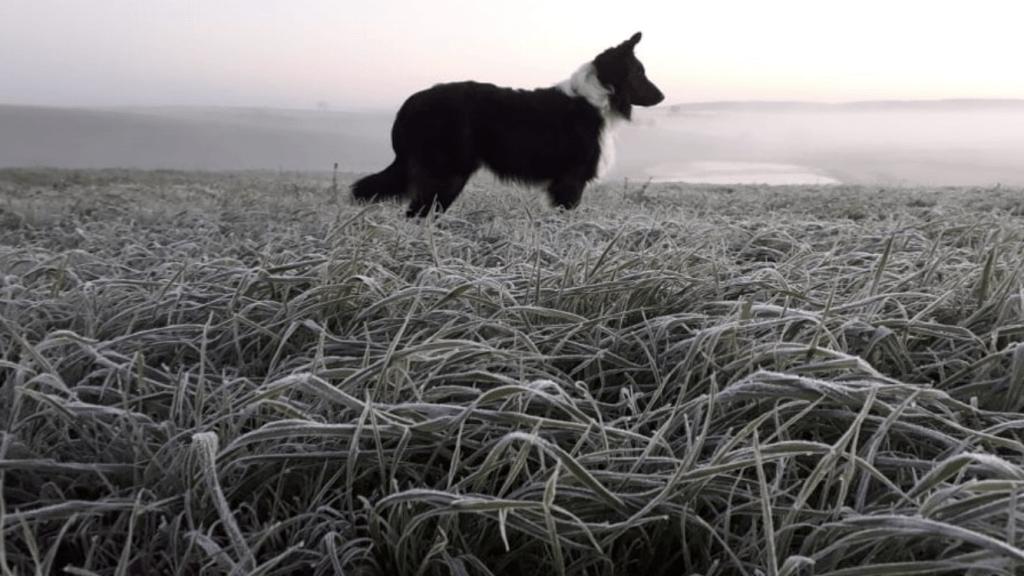 As lindas imagens do frio no Rio Grande do Sul