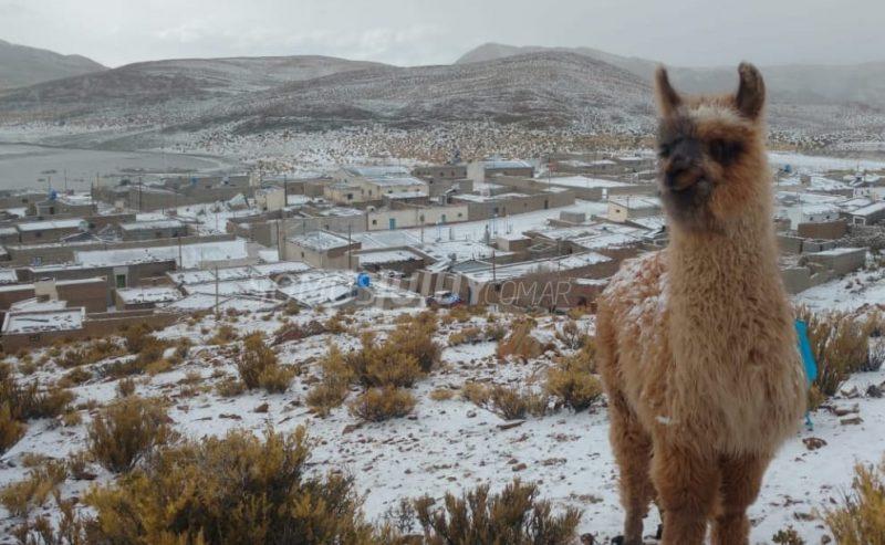 Neve encanta moradores de províncias do Norte argentino