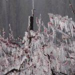 Setembro polar – Frio de -11°C na Argentina e de -3°C no Uruguai