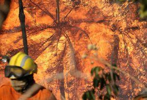 Setembro será um período crítico em queimadas