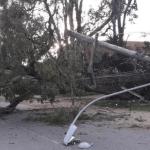 Ventania da madrugada derrubou árvores em Porto Alegre