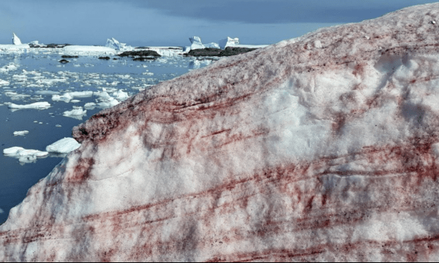 """""""Neve de sangue"""" espanta cientistas em base na Antártida"""