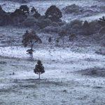 Sete dias em dezembro e três com geada no Sul do Brasil