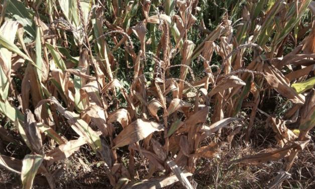 Semana será muito ruim para a agricultura do Rio Grande do Sul