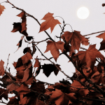 Tendência climática – O que esperar do outono de 2020