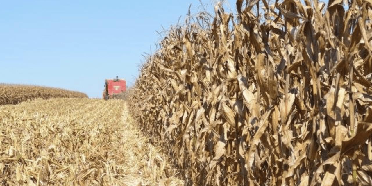 Estiagem – Fevereiro começa com más notícias para o campo gaúcho