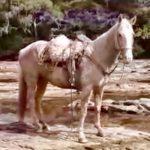 As impressionantes imagens de um dos principais rios gaúchos seco