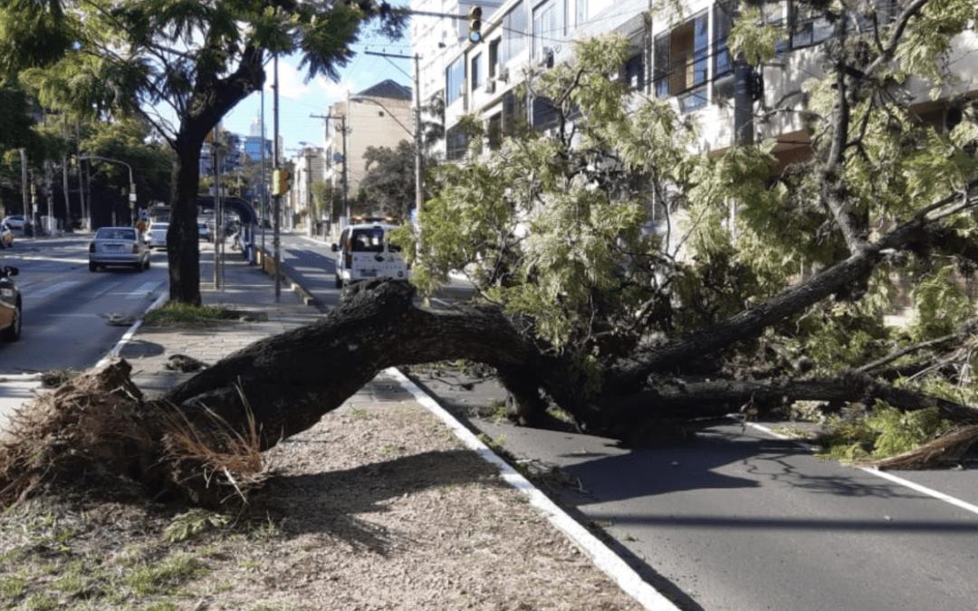 Vento provocou transtornos em Porto Alegre