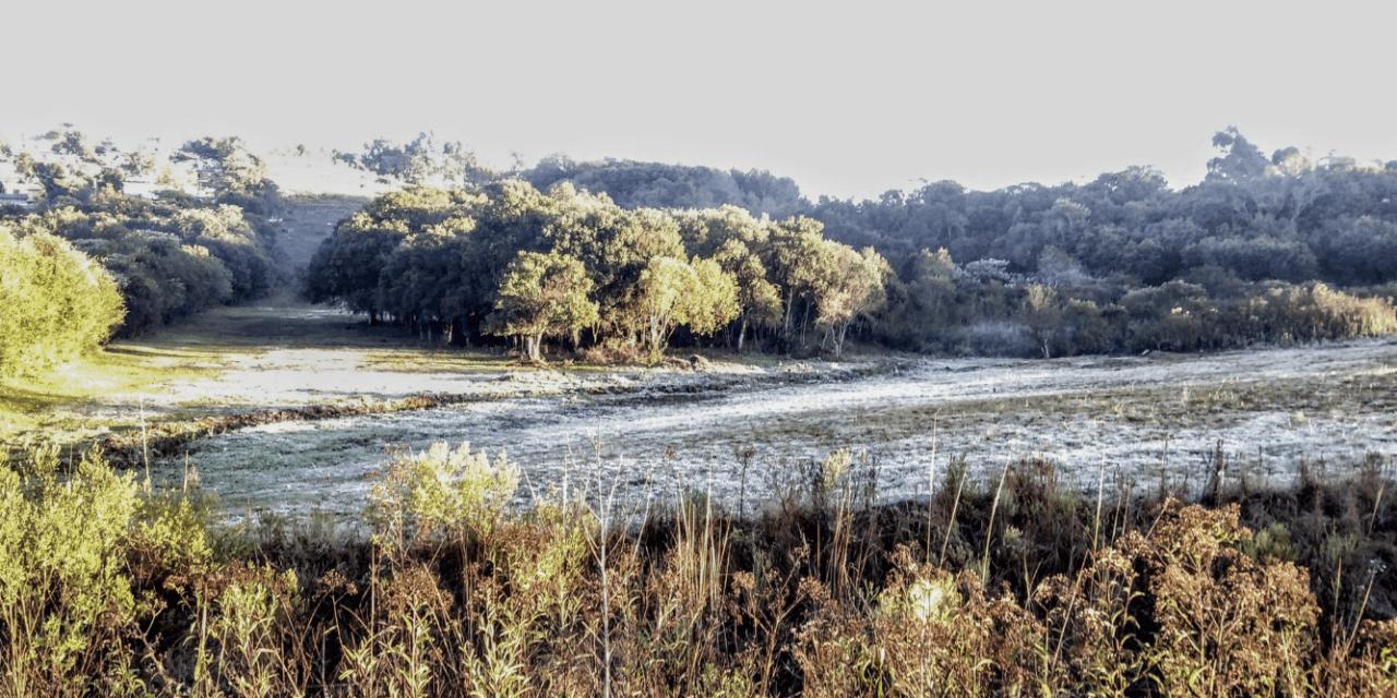 Veja as mínimas deste sábado no Rio Grande do Sul