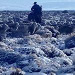 As incríveis imagens da grande nevada no Sul do continente