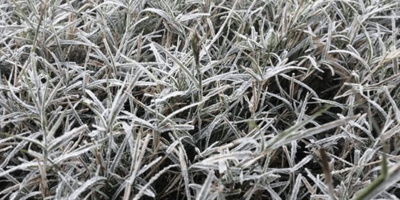 Uruguai tem mais um dia de mínimas abaixo de zero e geada