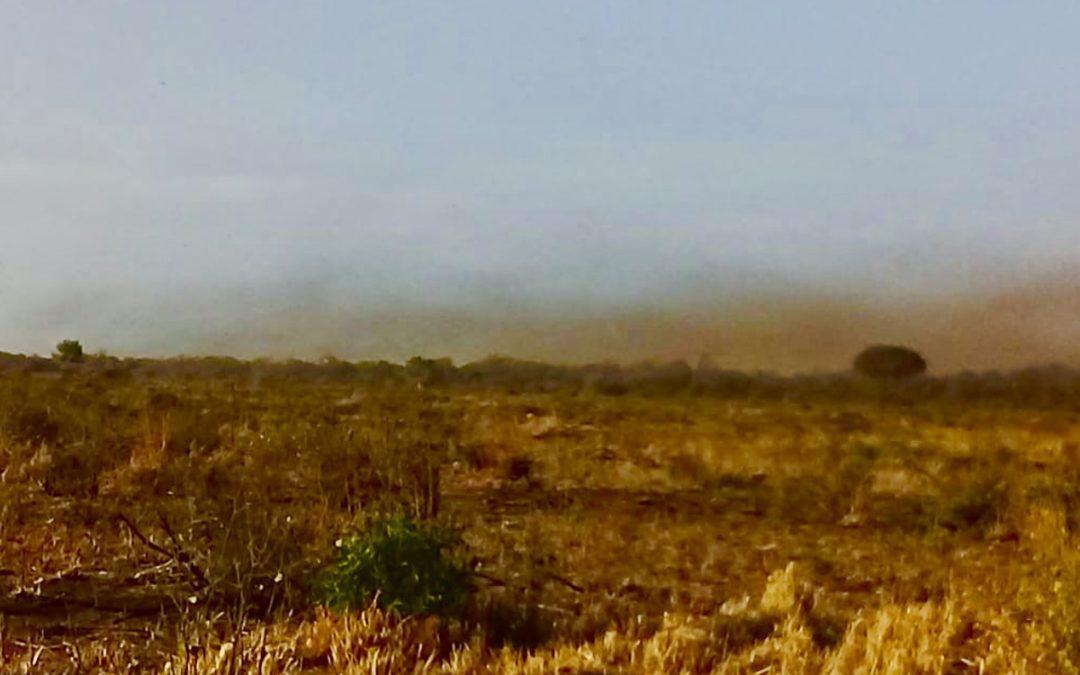 Surge mais uma nuvem de gafanhotos e agora são três focos na Argentina