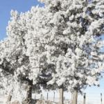 Frio trouxe imagens incríveis em Jaquirana