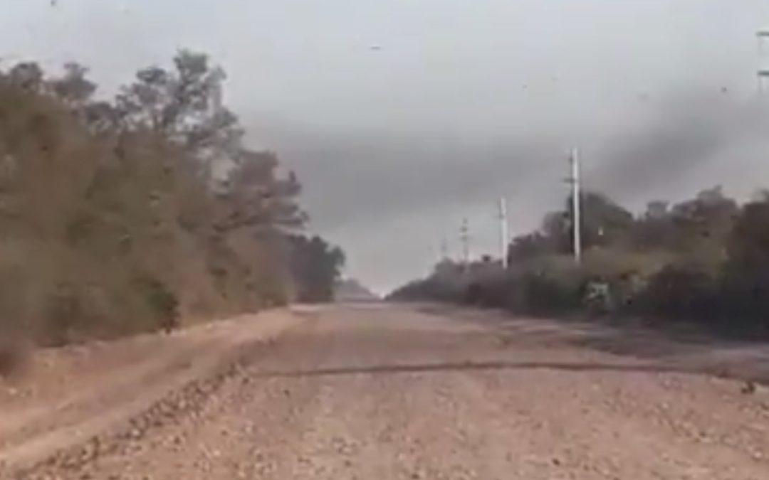 Impressionante vídeo da nova nuvem de gafanhotos na Argentina
