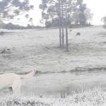 Rio Grande do Sul abaixo de zero no amanhecer mais frio de 2020