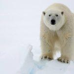 Gelo derrete com velocidade assustadora no Ártico