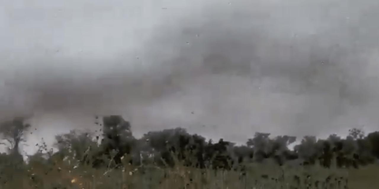 Impressionante vídeo mostra enorme nuvem de gafanhotos na Argentina