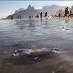 Poluição da epidemia nas praias brasileiras