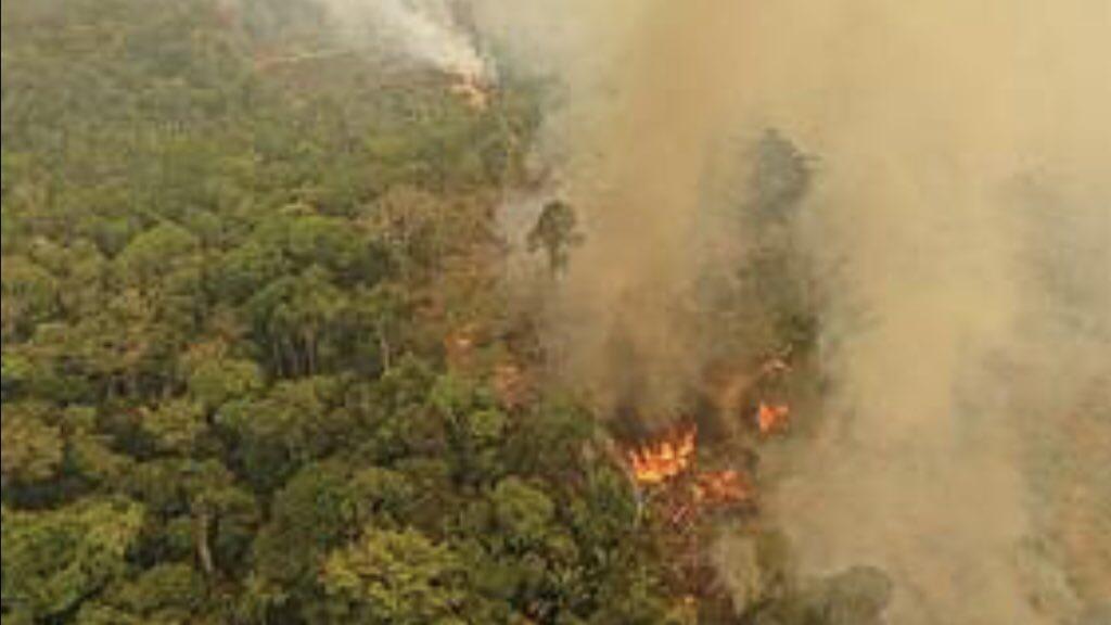 Queimadas estão em níveis históricos na Amazônia e Pantanal