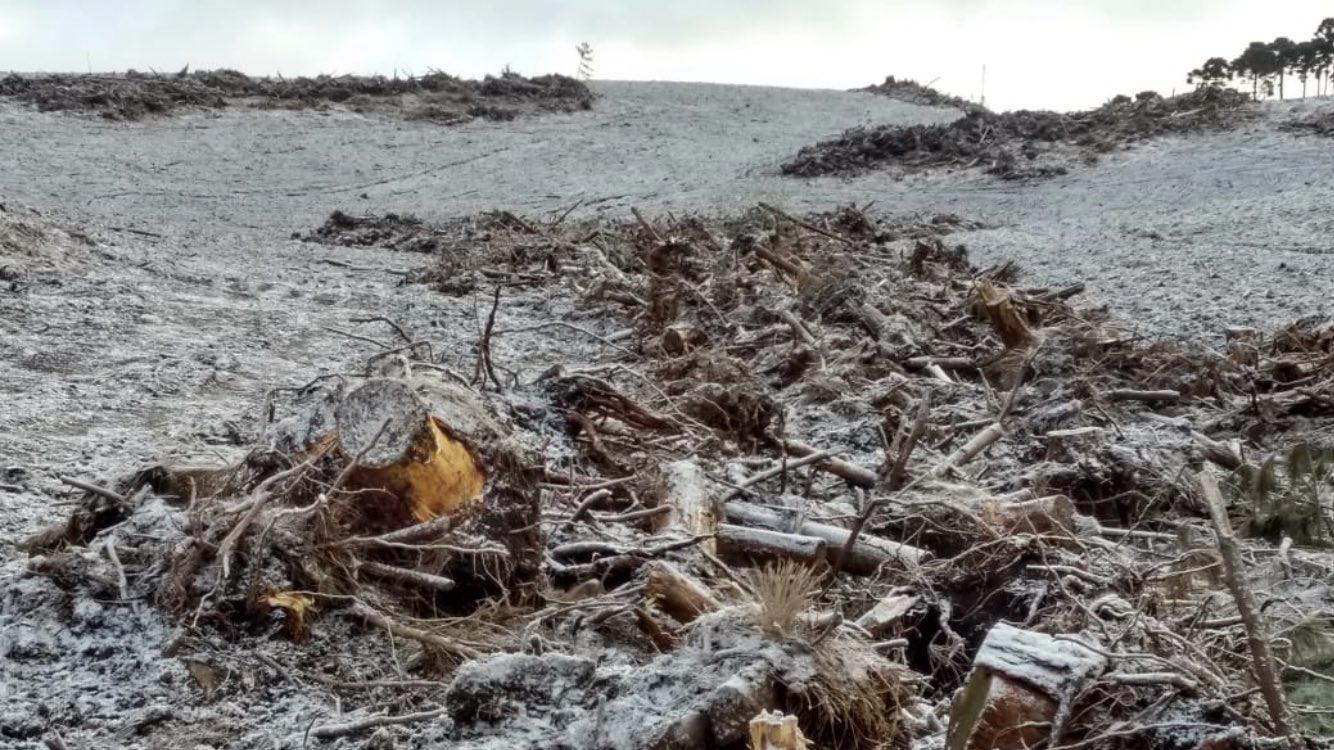 Campos amanhecem coberto de neve e geada em Ausentes