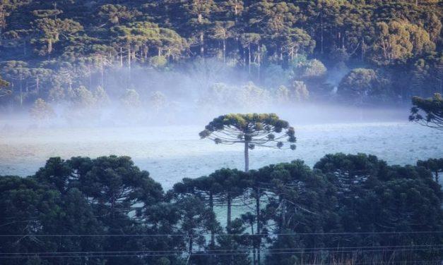 Frio e geada no Sul do Brasil