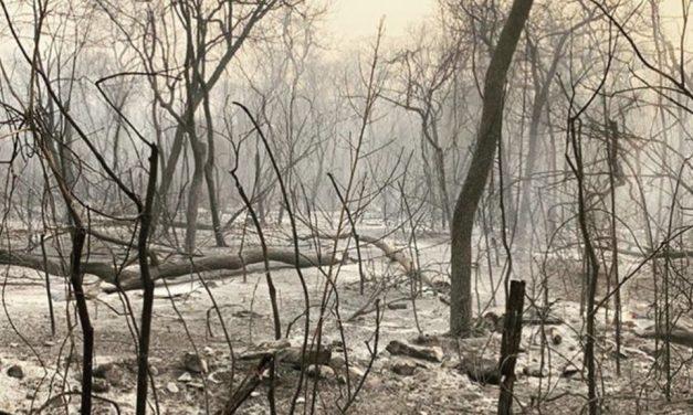 Mais de um quarto do Pantanal já foi destruído