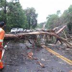 Temporal causou bloqueio da BR-116 na Serra Gaúcha