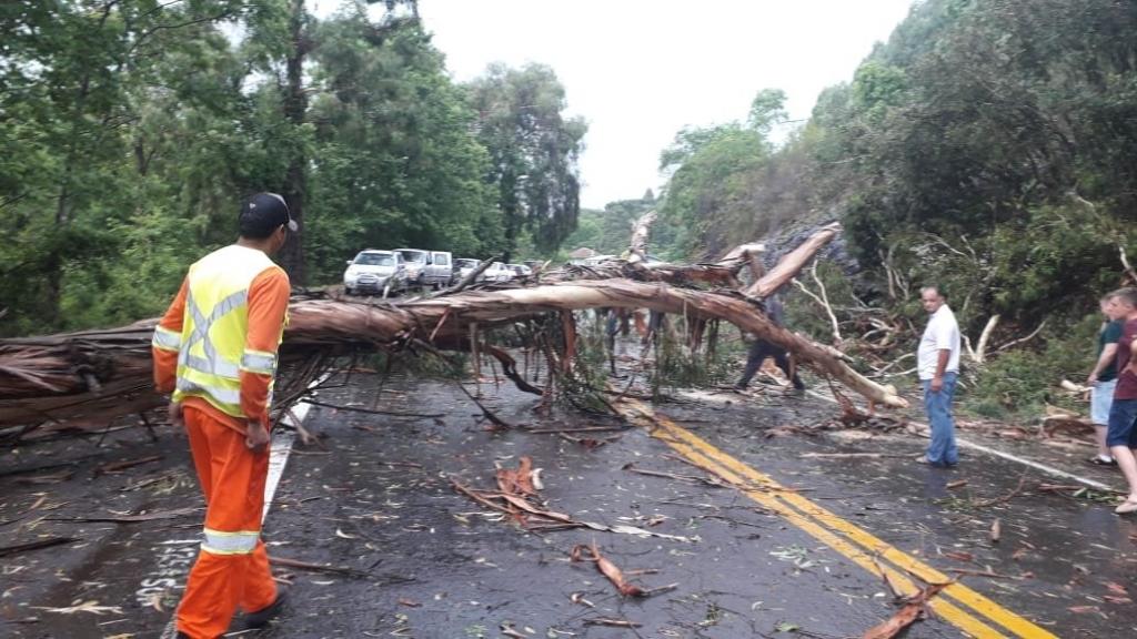 """<span class=""""entry-title-primary"""">Temporal causou bloqueio da BR-116 na Serra Gaúcha</span> <h2 class=""""entry-subtitle"""">Vendaval isolado derrubou árvores sobre a rodovia que já foi liberada </h2>"""