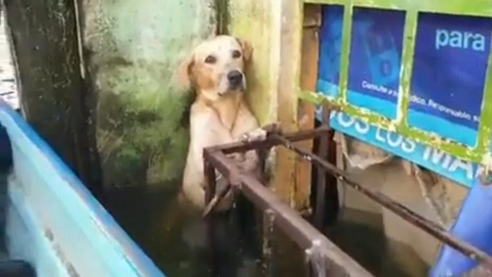"""<span class=""""entry-title-primary"""">Resgate de cão em enchentes comove o México</span> <span class=""""entry-subtitle"""">Sul do país ainda enfrenta inundações trazidas pelo furacão Eta na América Central </span>"""