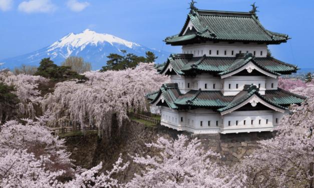 O que as cerejeiras do Japão revelam sobre o aquecimento global