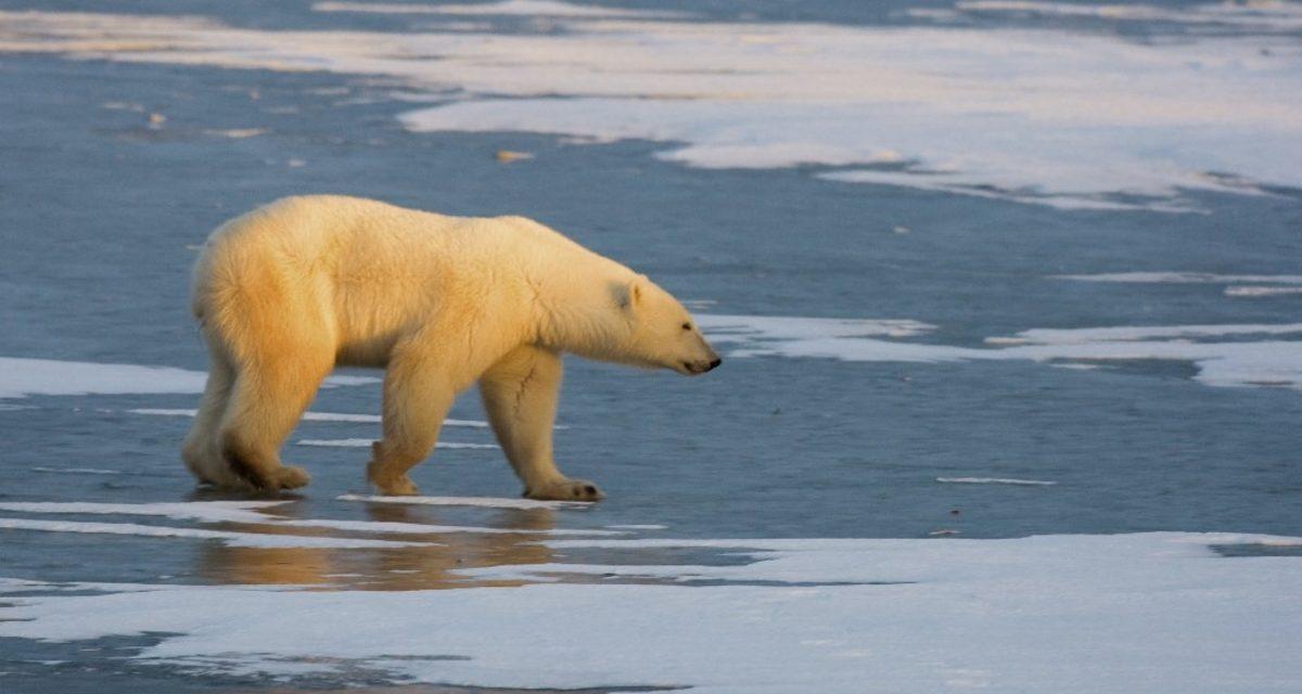 """<span class=""""entry-title-primary"""">Ártico e Antártida vivem realidades muito distintas</span> <span class=""""entry-subtitle"""">Cobertura de gelo marinho apresenta condições muito diferentes nos dois extremos do planeta neste momento </span>"""