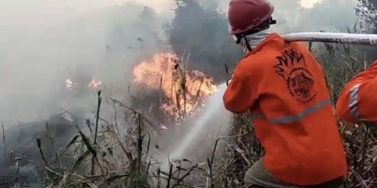 """<span class=""""entry-title-primary"""">Pantanal volta a queimar</span> <h2 class=""""entry-subtitle"""">Número de focos de queimadas cresce rapidamente com o tempo seco e muito quente no Pantanal, mas situação até agora é melhor que a do ano passado </h2>"""