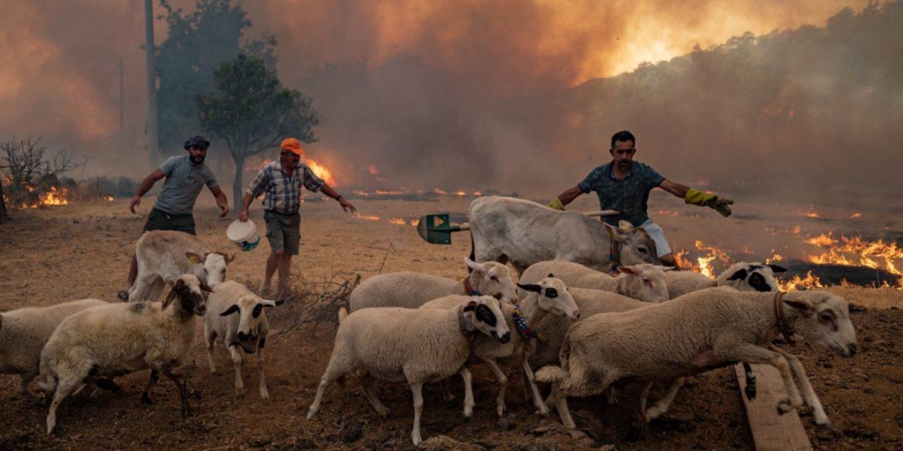 """<span class=""""entry-title-primary"""">Fogo ameaça local de surgimento dos jogos olímpicos</span> <h2 class=""""entry-subtitle"""">Grécia, Itália e Turquia, dentre outros países do Mediterrâneo, experimentaram uma violenta onda de calor com muitos incêndios </h2>"""