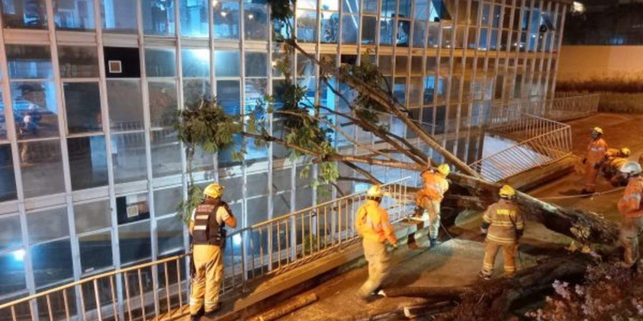"""<span class=""""entry-title-primary"""">Temporal provocou estragos em Brasília</span> <h2 class=""""entry-subtitle"""">Chuva forte tão esperada que caiu no começo da noite na capital federal veio acompanhada de ventania</h2>"""