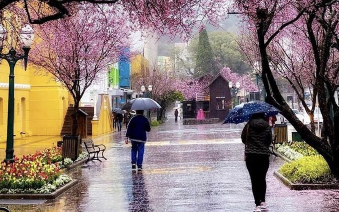Previsão do tempo para hoje é de retorno da chuva ao Sul do Brasil Chuva alcança a maioria das regiões gaúchas da tarde para a noite e em Porto Alegre só chega no fim do dia ou no início do domingo
