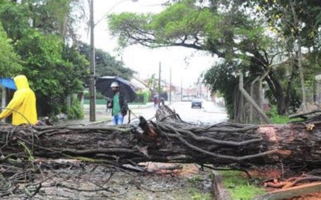 Porto Alegre registra queda de árvores e alagamentos Capital gaúcha teve fortes rajadas de vento no começo da manhã de hoje junto com muita chuva e raios