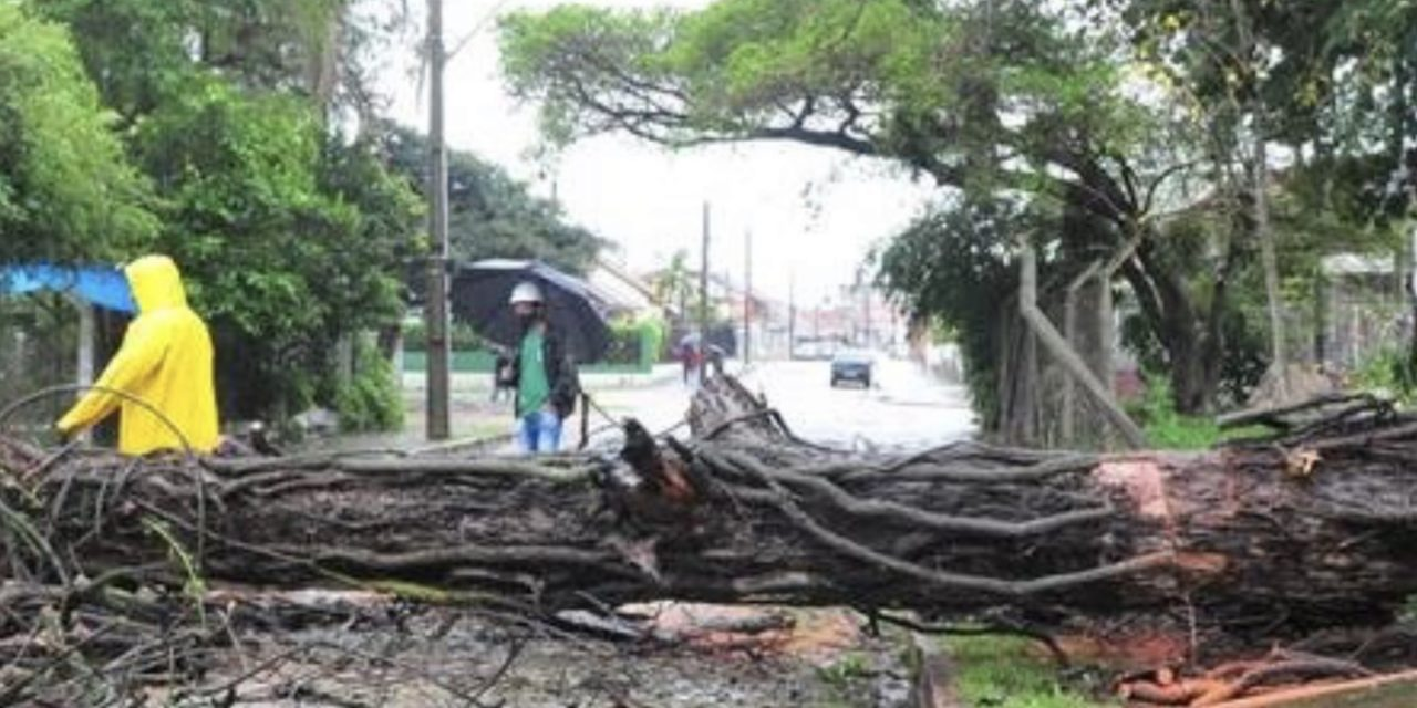 """<span class=""""entry-title-primary"""">Porto Alegre registra queda de árvores e alagamentos</span> <h2 class=""""entry-subtitle"""">Capital gaúcha teve fortes rajadas de vento no começo da manhã de hoje junto com muita chuva e raios</h2>"""