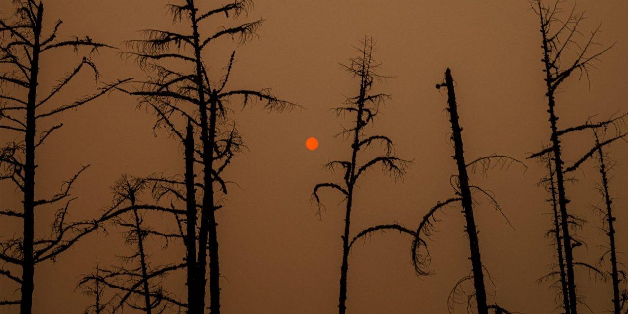 """<span class=""""entry-title-primary"""">Incêndios na Rússia emitiram mais CO2 que todas queimadas de florestas do mundo</span> <h2 class=""""entry-subtitle"""">A a queima de florestas russas liberou 1,3 gigatonelada de dióxido de carbono em agosto, o valor mais alto desde que o Copernicus iniciou as medições em 2003</h2>"""