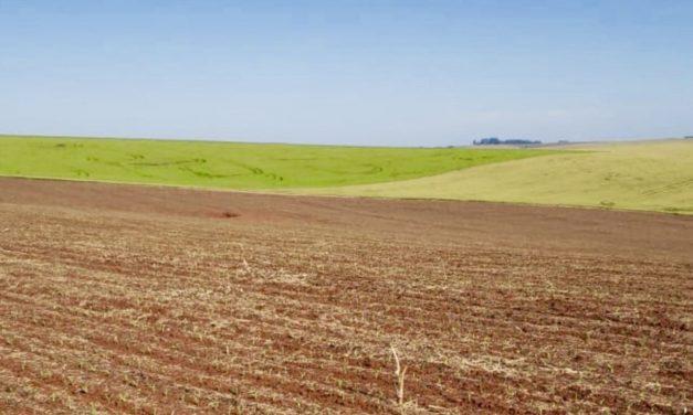 Previsão do tempo – Condição favorável ao plantio da safra de verão