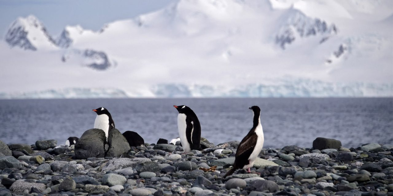 """<span class=""""entry-title-primary"""">Polo Sul tem o inverno mais frio já registrado</span> <h2 class=""""entry-subtitle"""">Desde que começaram as medições em 1957 nunca fez tanto frio no período de abril a setembro no Polo Sul </h2>"""