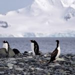 Polo Sul tem o inverno mais frio já registrado